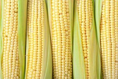 Kolby kukurydzy między zielonymi liśćmi