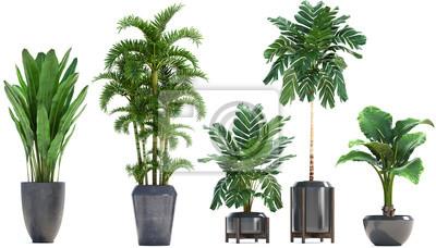 Plakat Kolekcja Egzotyczne rośliny w garnku na białym tle