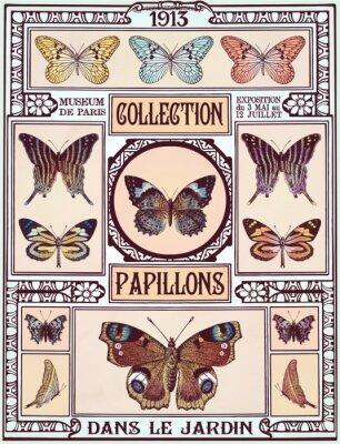 Plakat Kolekcja motyli