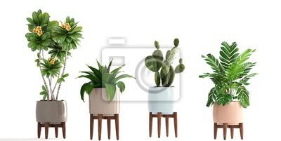 Plakat kolekcja roślin ozdobnych w doniczkach