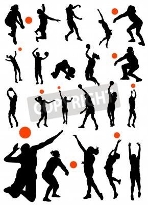 Plakat Kolekcja wektora siatkówka