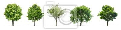 Plakat Kolekcja wysokiej rozdzielczości Drzewo samodzielnie na białym tle