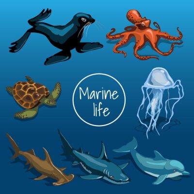 Plakat Kolekcja zwierząt morskich