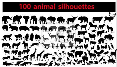 Plakat Kolekcja zwierzęce sylwetki na białym tle