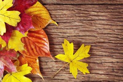 Plakat Kolorowe jesienne liście