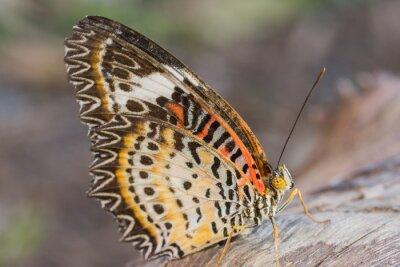 Plakat kolorowe motyle w przyrodzie