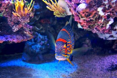 Plakat Kolorowe ryby na dnie.