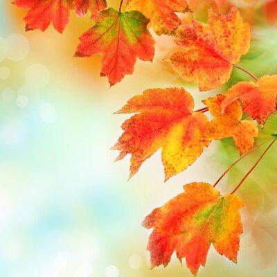 Plakat Kolorowe spadek liści w tle. Płytkie fokus.