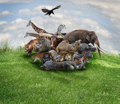 Plakat Koncepcja zwierzęta