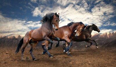 Plakat konie dziki skok laurowe