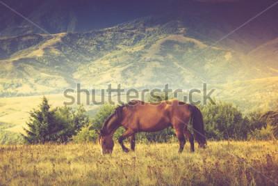 Plakat Konie pasą się w górach. Jesień krajobraz. Przefiltrowany obraz: efekt przetworzony krzyża w stylu vintage.