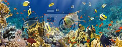 Plakat Koral i ryby