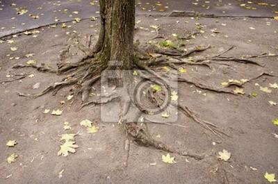 Plakat korzenie drzew miejskich stoczni
