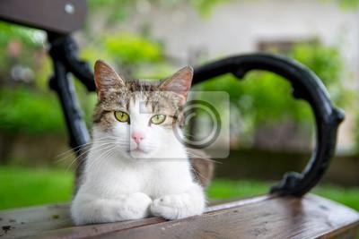 Plakat Kot Leży Na ławce Na Wymiar Lato Biały Zielony Redropl