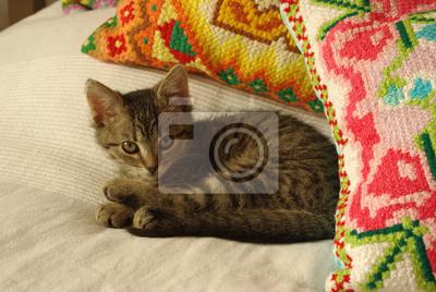 Plakat Kot Leży Na łóżku Na Wymiar żółty Różowy Młody Redropl