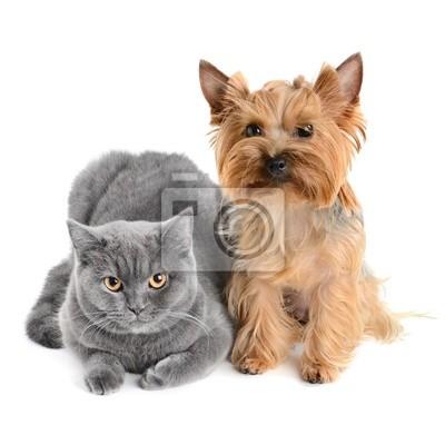 kotów i psów