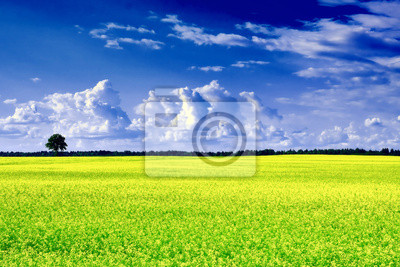 krajobraz