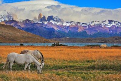 Plakat Krajobraz w parku Torres del Paine