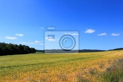 krajobrazu wiejskiego z pola lasu błękitne niebo i białe chmury