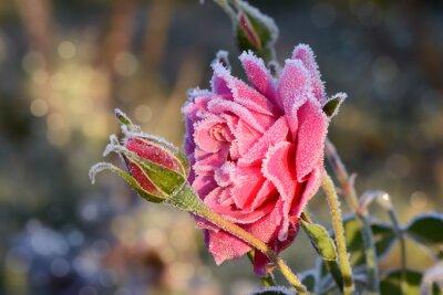 Plakat kwiaty 529
