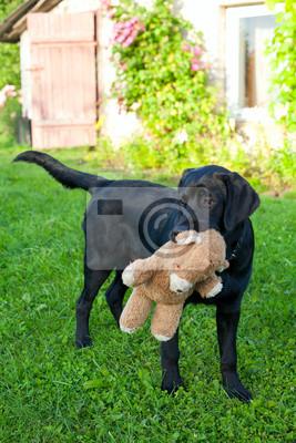 Plakat labrador ze swoim misiem