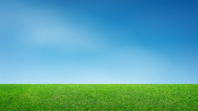 Plakat Landscape of grass field and green environment park use as natural background. Field of green grass and blue sky.