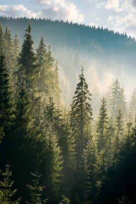 Plakat las świerkowy na wzgórzu w porannej mgle. piękne krajobrazy przyrody w pięknym świetle