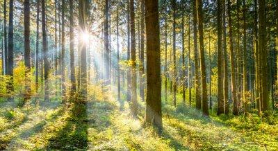 Plakat Las w słońcu