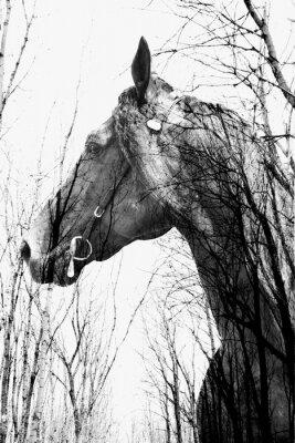 Plakat Las wewnątrz ina koń sztuki, multiexposition