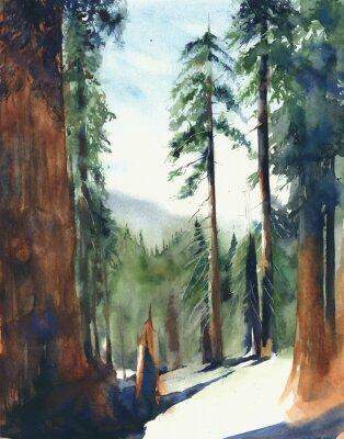 Plakat Lasowi duzi drzewa sekwoja parka narodowego krajobrazu sierra Nevada gór akwareli obrazu ilustracja