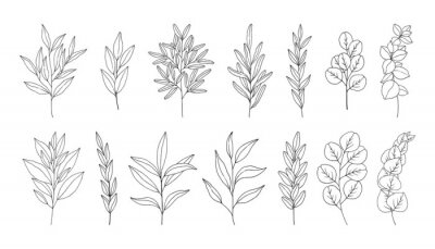 Plakat Leaves set, line art hand drawn branches. Twigs of eucalyptus, rosemary, olive. Botanical elements for design projects, wedding decoration. Vector illustration, black outline, isolated on white.