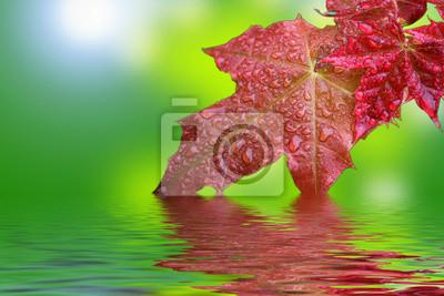 liści klonu