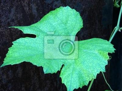 Plakat liści winorośli