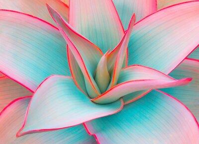 Plakat liście agawy w modnych pastelowych kolorach do projektowania