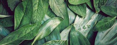 Plakat Liście leaf tekstury zielonego organicznie tła przygotowania makro- closeu