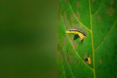 Plakat Lizard na liści