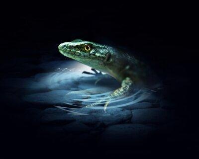 Plakat Lizard on the dark