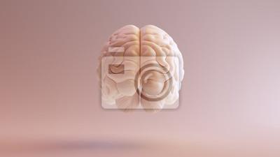Plakat Ludzki mózg Anatomiczna modela 3d ilustracja