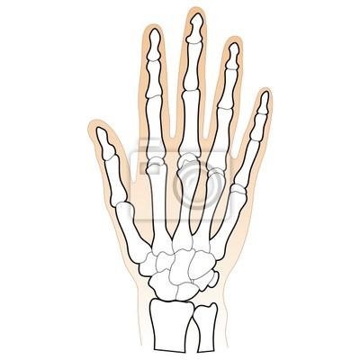 Ludzkie Kości Dłoni Plakaty Redro