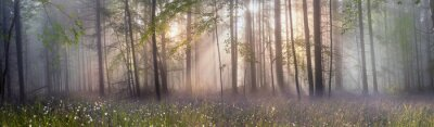 Plakat Magia Karpacki las o świcie