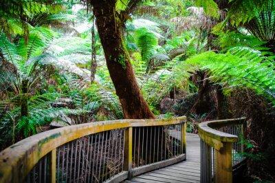 Plakat Maits Reszta Rainforest Trail na Great Ocean Road, Australia