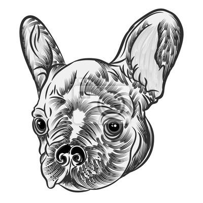 Plakat Małe słodkie Buldog francuski puppy tatuaż stylu koncepcji na białym tle. Przyjazny portret doggy. Ilustracji wektorowych.