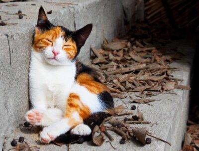Plakat Mały kot
