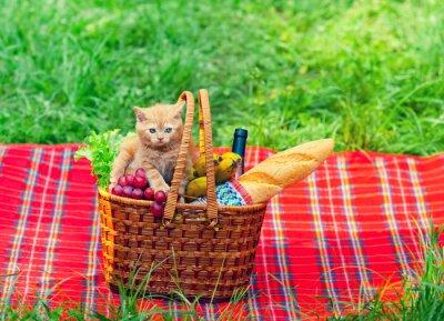 Plakat Mały kotek na piknik kosz z owocami na kocu