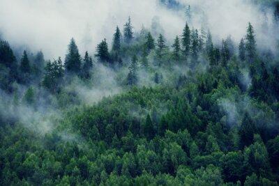 Plakat Mglisty krajobraz z jodłowym lasem. Poranna mgła w górach. Piękny krajobraz z widokiem na góry i poranną mgłą.