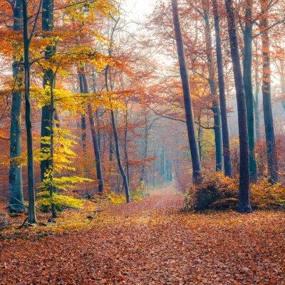 Plakat Mglisty las jesień