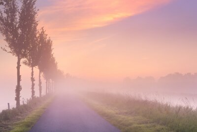 Plakat Mglisty wschód słońca w typowy krajobraz polderów w Holandii