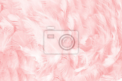 Plakat miękki różowy kolor vintage trendy kurczak pióro tekstura tło
