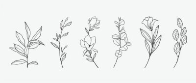 Plakat Minimal botanical hand drawing design for logo and wedding invitation. Floral line art.  Flower and leaves design collection for bouquets decoration, card and packaging background.
