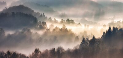 Plakat Mist in forest with sunbeam rays, Woods landscape